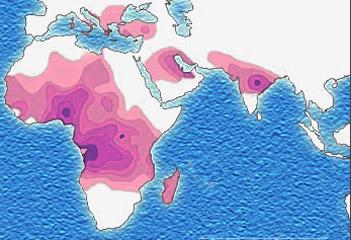 distribution de la drépanocytose